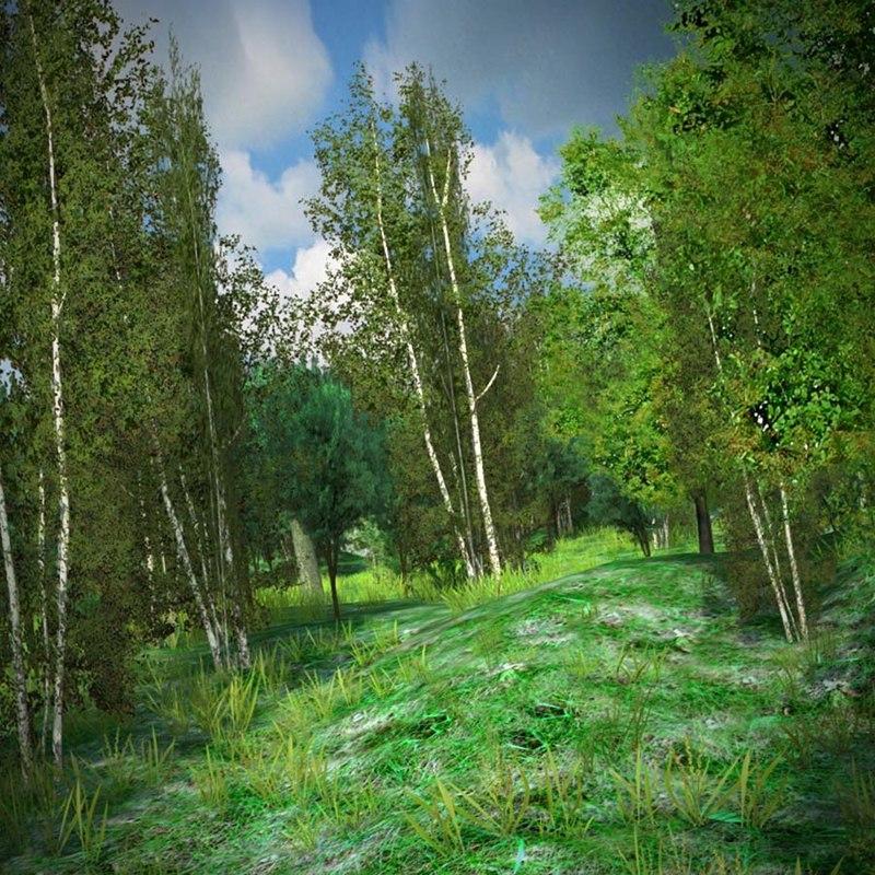 forestmin_001.jpg