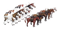 maya horse pack