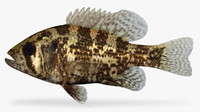 3d ambloplites rupestris rock bass model