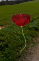 rose obj