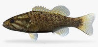 3d micropterus dolomieu smallmouth bass model