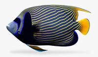 emperor fish 3d fbx