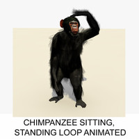 rigged chimpanzee animation chimp 3d c4d