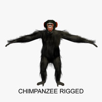 3d model of rigged chimpanzee chimp