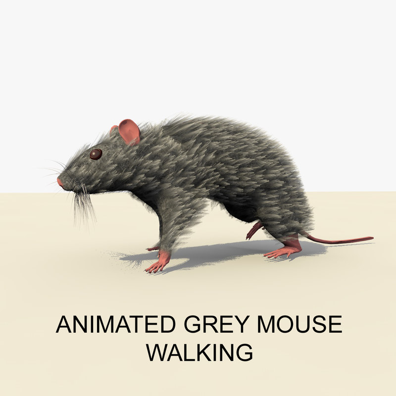 WALKING GREY MOUSE FRONT PAGE.jpg