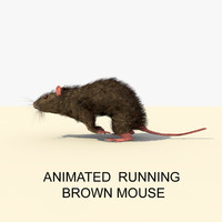 maya running brown mouse animations