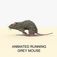 3d grey running mouse animations