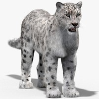 Snow Leopard (Fur)