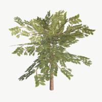 bush type 1 3d model