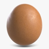 3d model of chicken egg