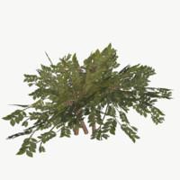 3d bush type 2 model