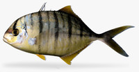 3d model golden trevally