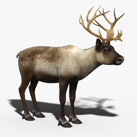 reindeer modeled 3d model
