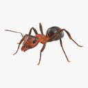 ant 3D models