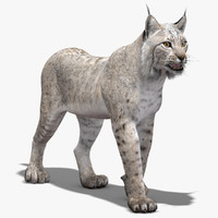 3d lynx white rigging animation
