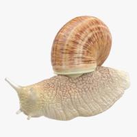 snail max