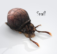 3d snail land shell