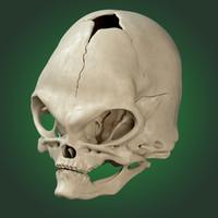 alien skull 3d obj