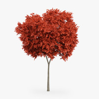 3d model red maple tree 6