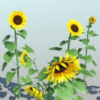 Sunflower (9 Items)