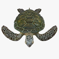 3d green sea turtle rigged