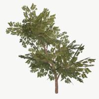 bush type 5 3ds