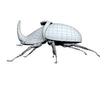 dynastinae rhinoceros beetle 3d max