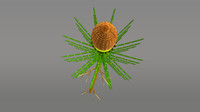 3d model equisetum plants