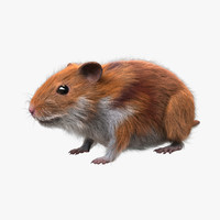 Hamster (FUR)