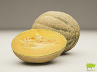 3d melon resolution model