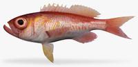 Bigeye Bass