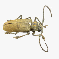 3d model realistic beetle
