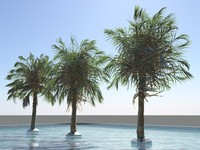 3d model of palm pool water