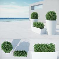 modern bushes 3d max