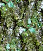 Mossy tree bark 17
