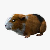 Guinea Pig - Dark (FUR)