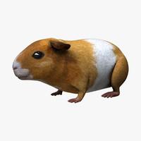 Guinea Pig - Light
