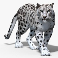 Snow Leopard (Animated)