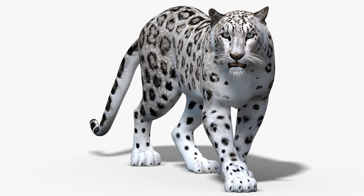 Cartoon snow leopard - photo#22