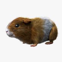 3dsmax guinea pig - fur