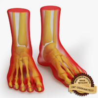 foot anatomy 3d obj