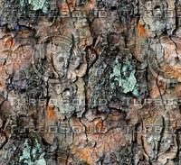 Tree bark 177