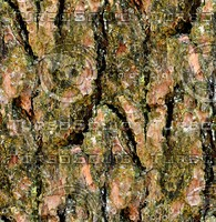 Tree bark 178
