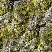 Tree bark 179