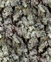 Tree bark 180