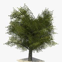 realistic tree version 1 3d model