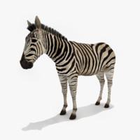 realistic zebra 3d model