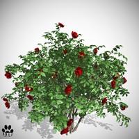 roses bush 3d fbx