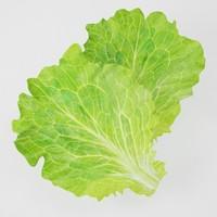 3d max lettuce leaves