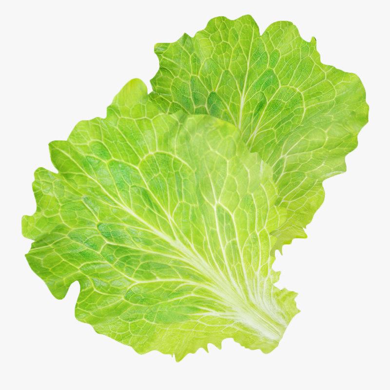 Lettuce leaves_000.jpg